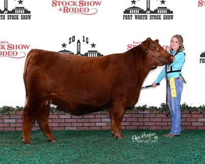 Whisnand Red Angus
