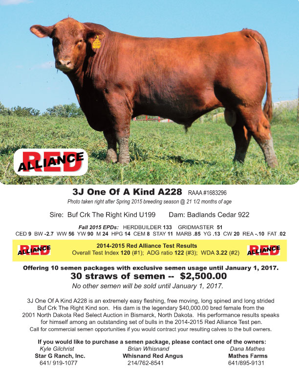 Whisnand Red Angus Cattle